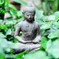 """✍️ """"Le plaisir se ramasse la joie se cueille et le bonheur se cultive.""""  Bouddha 🙏🧘🏽"""